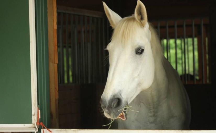hff_horse